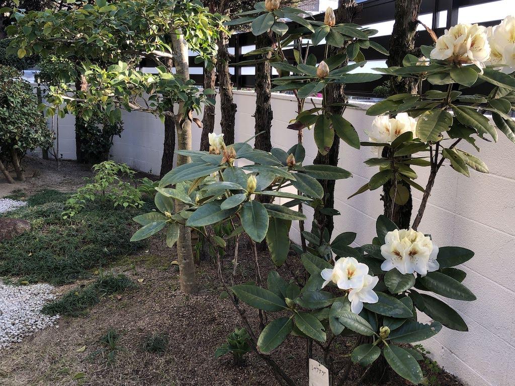 小さな庭の四月の花たち/April flowers