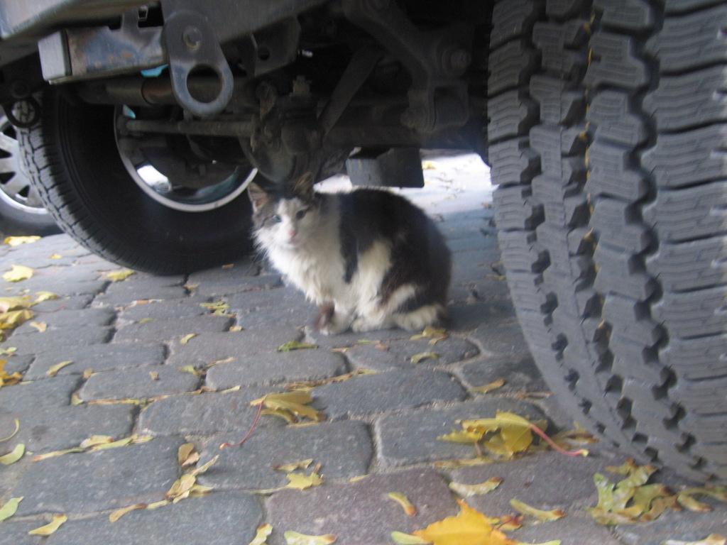 ラトヴィアの猫たち/BalticCat
