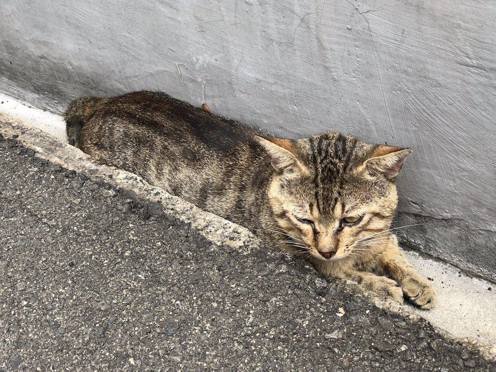 尾道の猫1/CatsinOnomichi1