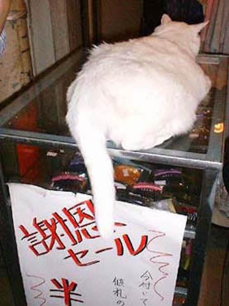 尾道の猫2/CatsinOnomichi2