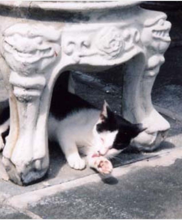 異国の猫1/ForeignCats1