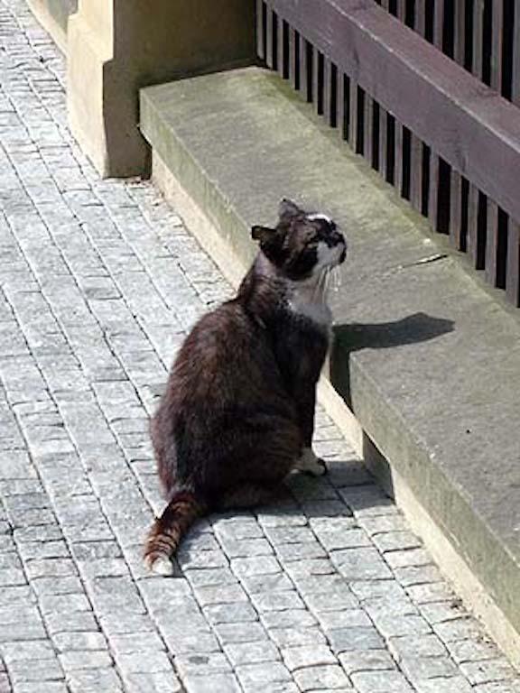 異国(チェコ共和国)の猫2/ForeignCats2