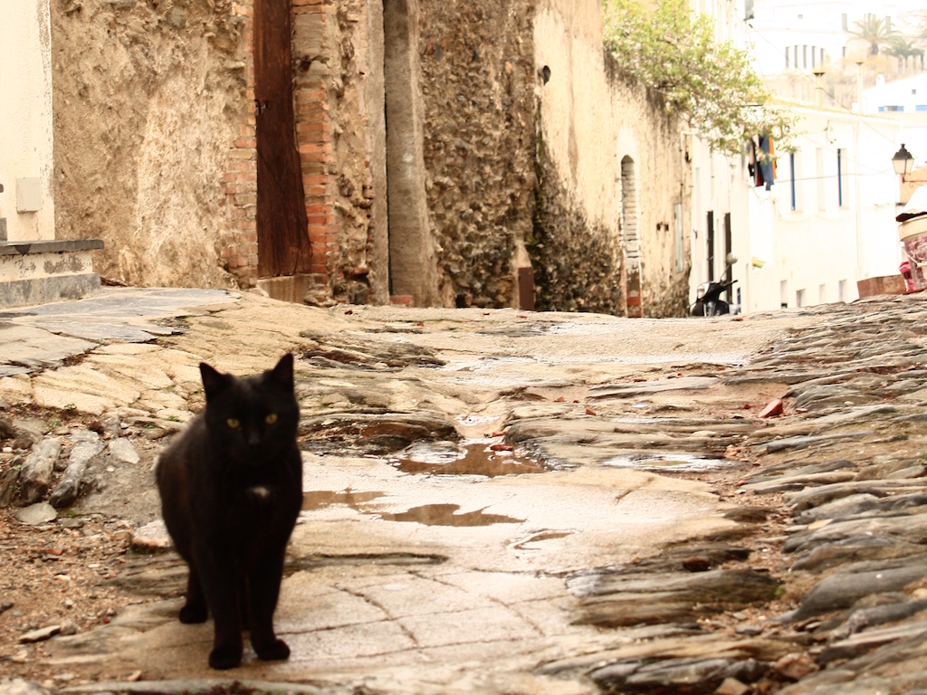異国(スペイン・カダケス)の猫4/ForeignCats4