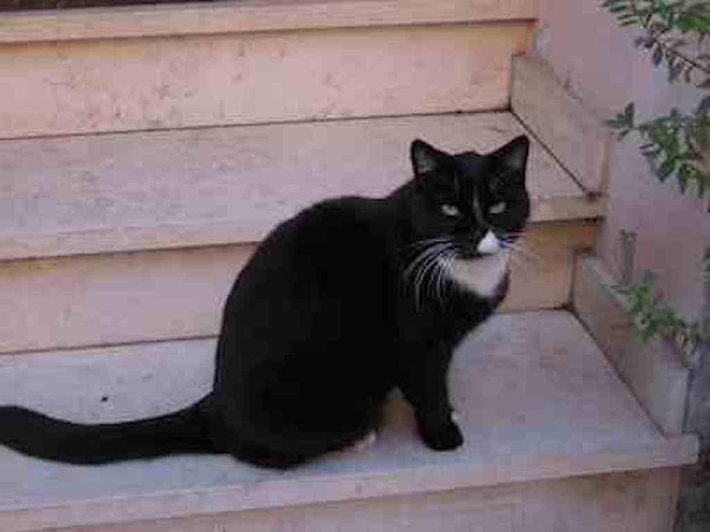 異国(北イタリア)の猫5/ForeignCats5