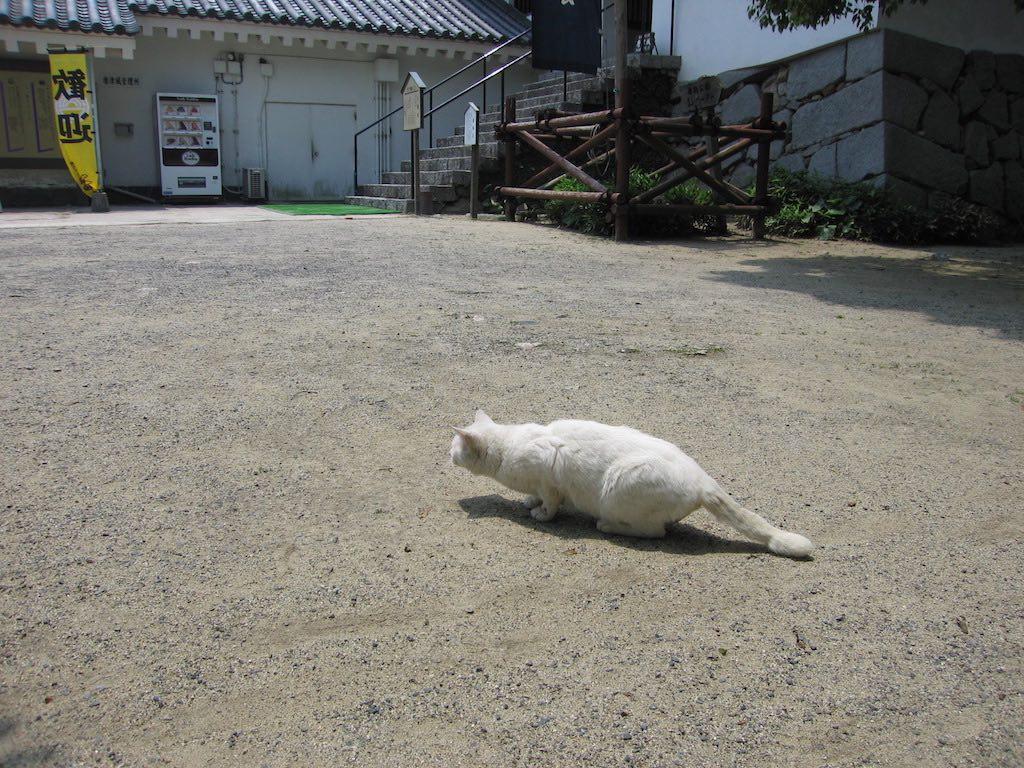 日本の猫1/JapaneseCats1