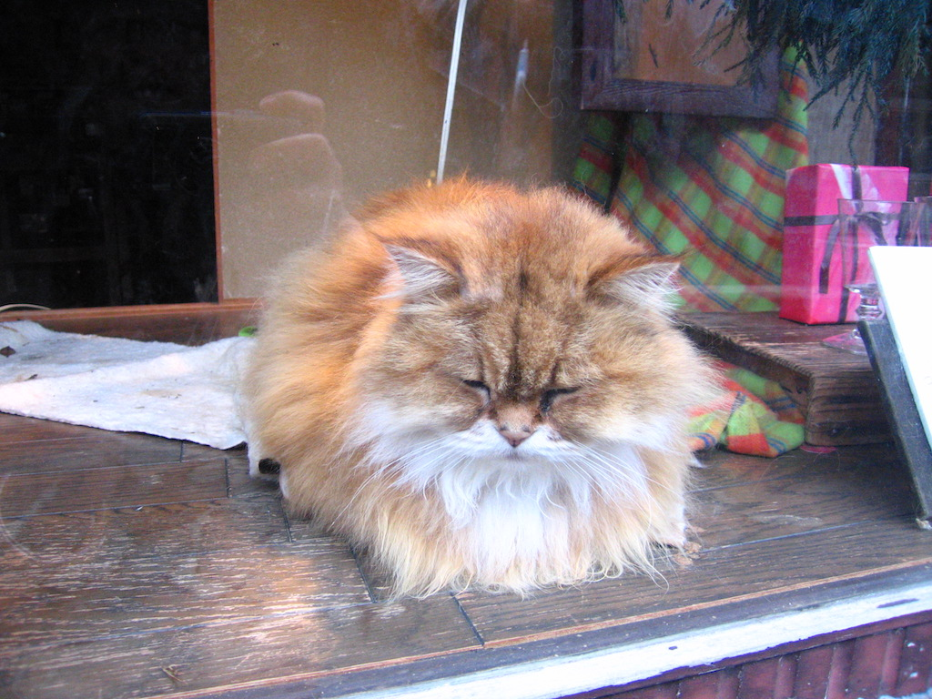 日本の猫3/JapaneseCats3