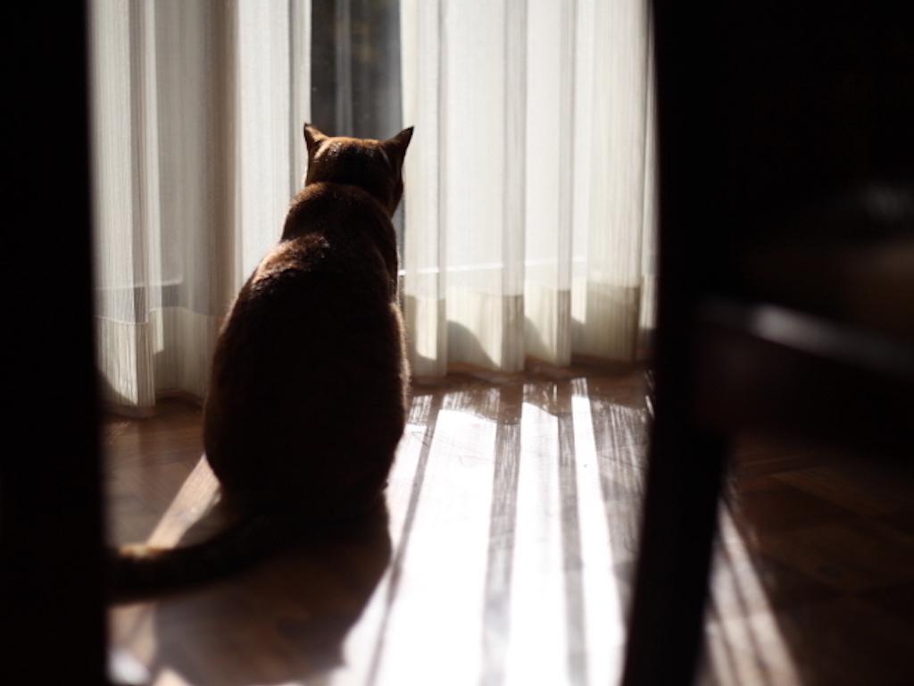 猫の先祖/NekonoSenzo