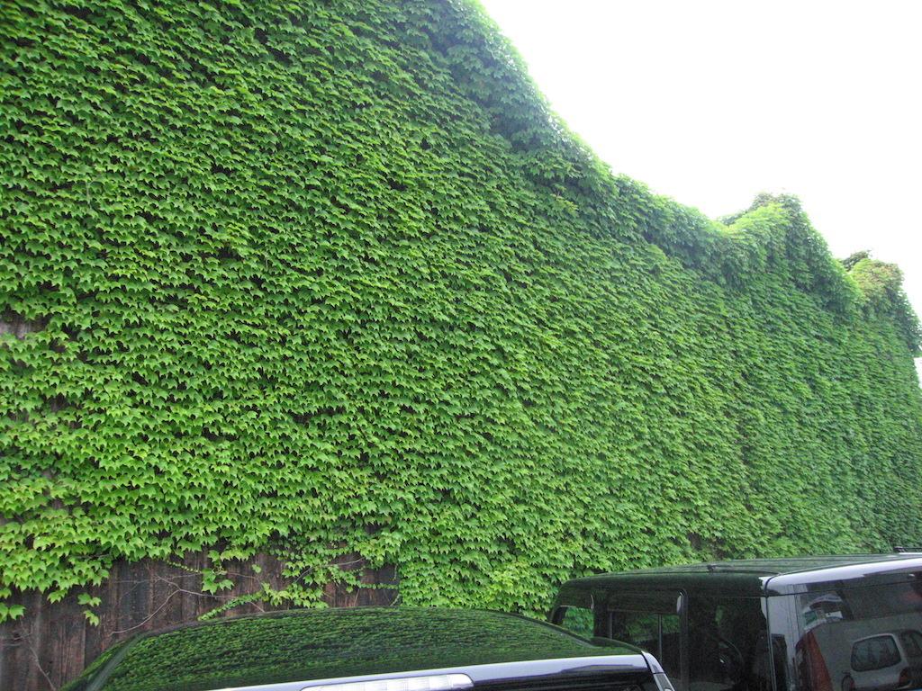 尾道の廃墟ガーデン/OnomichiRuinsGarden