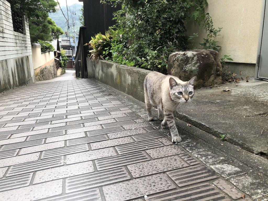 れんが(蓮華)坂の猫/RengasakaCat
